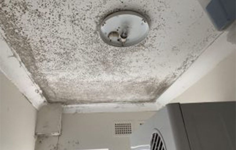 mould removal from ceiling